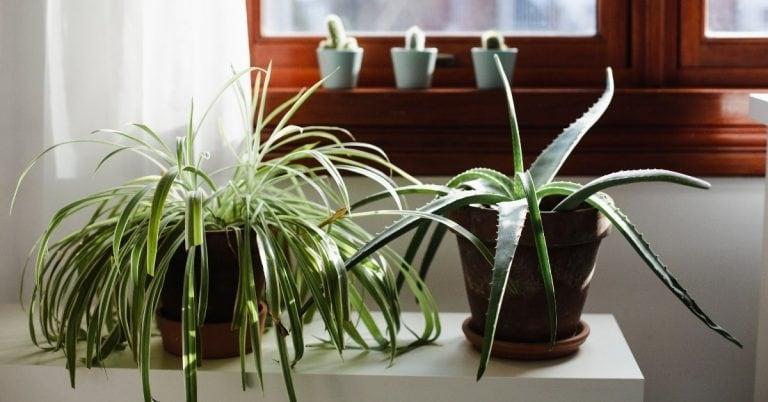 סוגי צמחים לבית