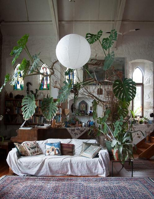 צמחים בתוך הבית